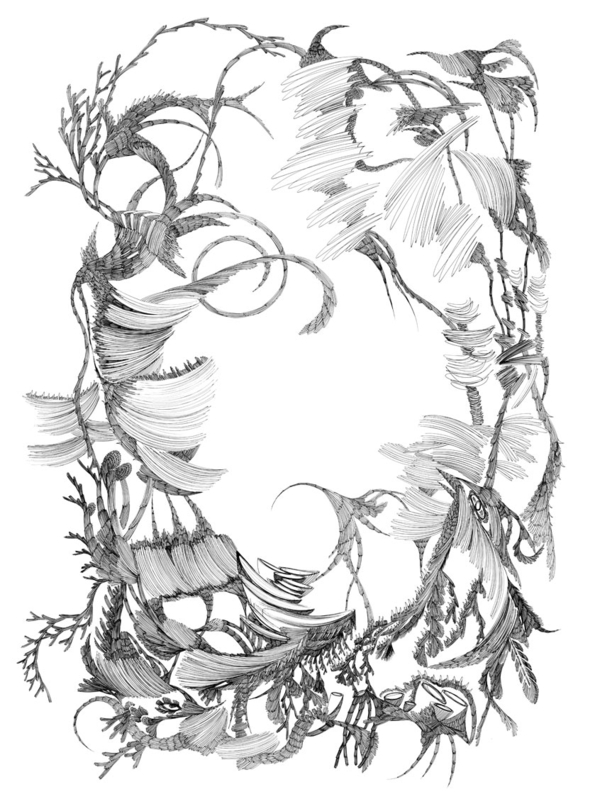 麦平《森林系列》插画